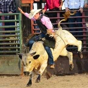 suhls rodeo bull riding