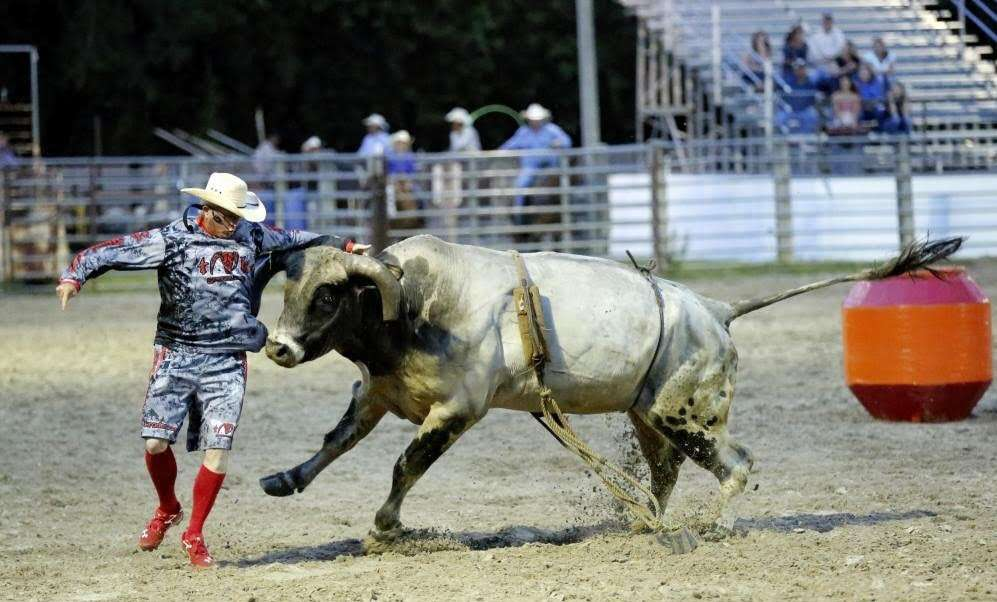 suhls rodeo bull chasing cowboy